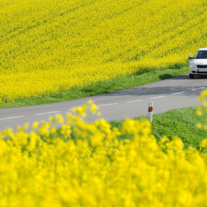 Consejos para el mantenimiento del coche en primavera