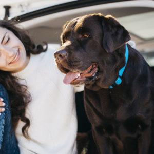 Viaja este verano con tu mascota