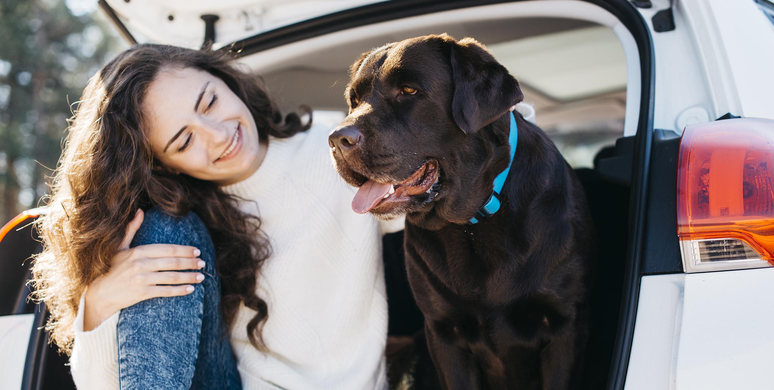 Viajar con mascota en coche